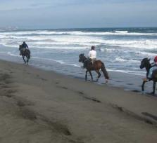 RITOQUE DUNES HORSEBACK - FULL DAY