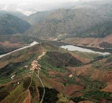 Douro Valley & Wineries Tour