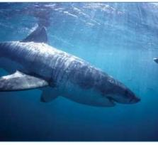 Join me for Shark Cage Diving in Gansbay