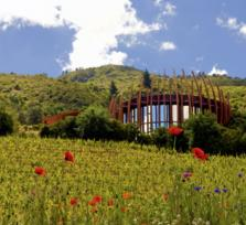 COLCHAGUA'S BOUTIQUE VINEYARDS