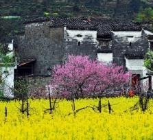 Huangshan Spring