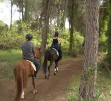 Join me for Horseback Riding at the Forest or Mountains
