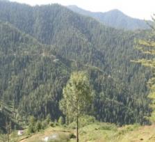 Shimla Odyssey