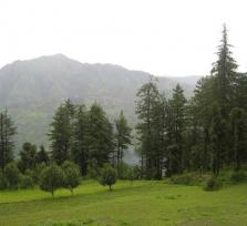 Shimla - Nature Trails