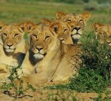 Safari Johannesburg
