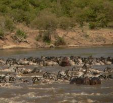 11days Best of Kenya Wildlife Safari