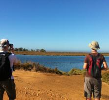 Birdwatching in the Algarve / Ludo & Quinta do Lago - Faro