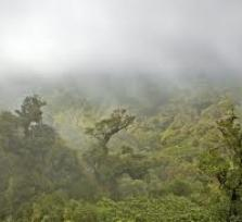 Forest Hike in Boquete/Panama