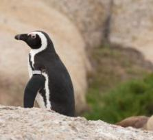 Walking with the penguins in CPT