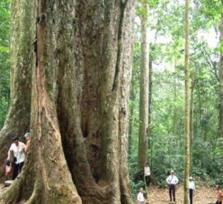 Cuc Phuong National Park 1 Day Trip