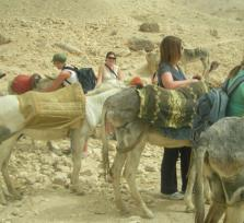 Donkey Tour to valley of the kings