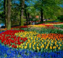 See theTulips and more with me (Amsterdam)
