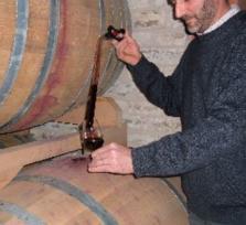 Euganean Hills Wine Tour