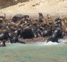 Full day to Paracas Private Tour