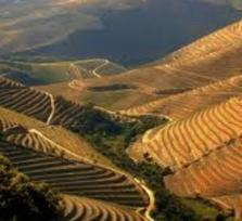 Douro Valley Wine Experience (UNESCO) - Private Shore Excursion