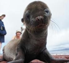 Galapagos Charming