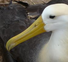 Galapagos Charming II