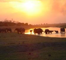 Zimbabwe Discovery