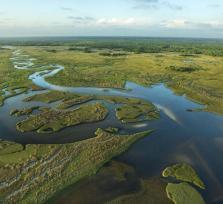 Discover the Everglades!
