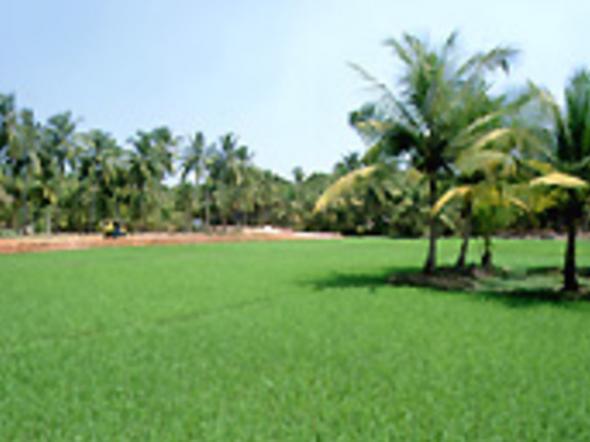 offer image