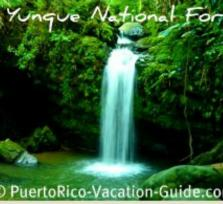 El Yunque National Forest Hiking Tour
