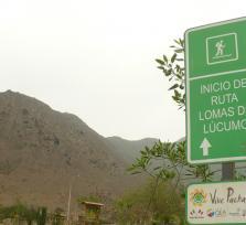 Lucumo hills - Lomas de Lucumo