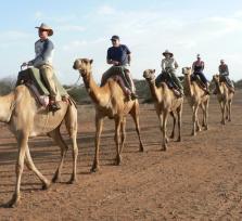 Bedouin dinner+camel ride+star gazing