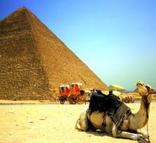 Visit Cairo's Camel Market