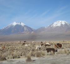 Sajama National Park